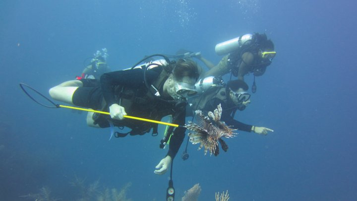 DIVING LocalReef LionfishHunt