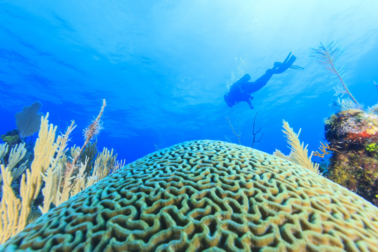 Diving the reef near St. George's Caye Belize